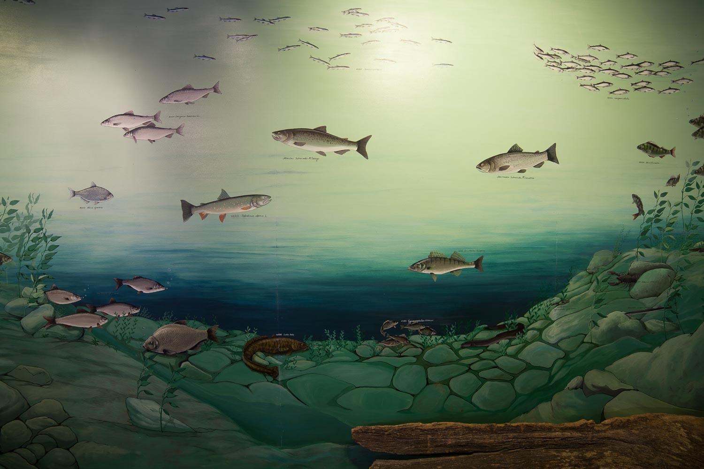 Seinämaalaus järvikaloista.