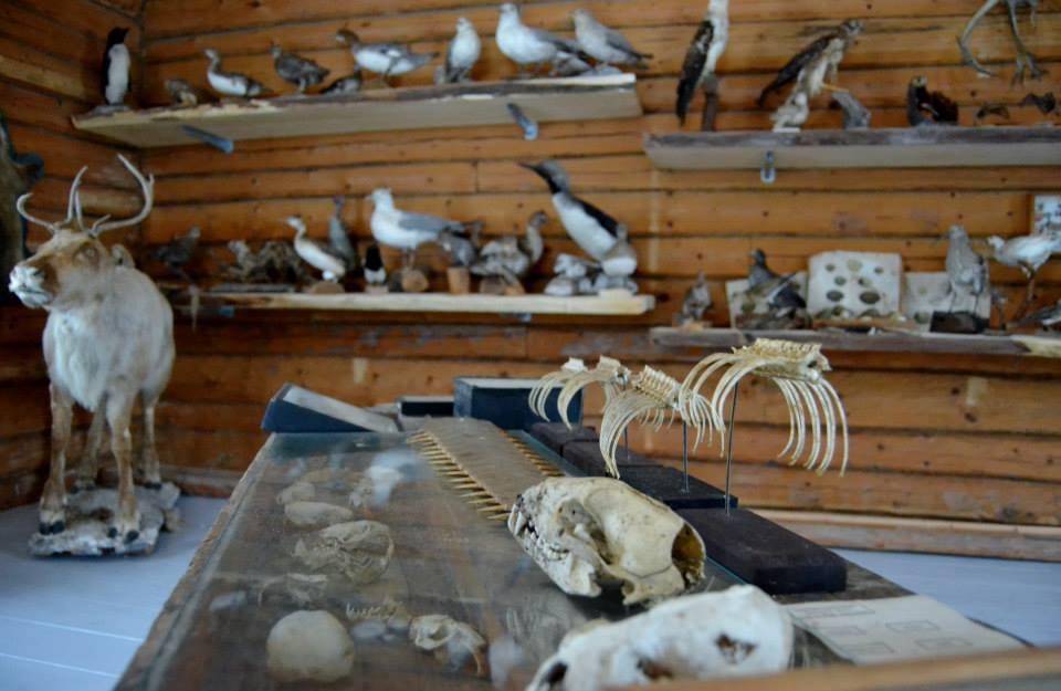 Eläimiä Häggin eläintäyttämön museon näyttelyssä.
